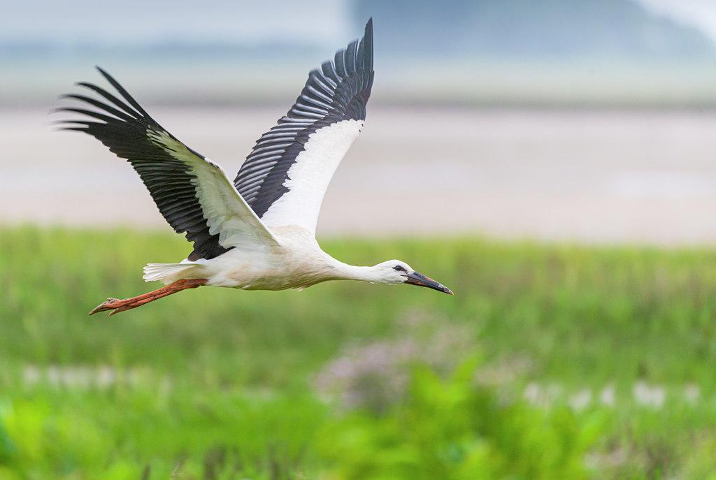Vogelwandelingen en lezingen Fwiet! Fwiet! geannuleerd tot en met 3 april